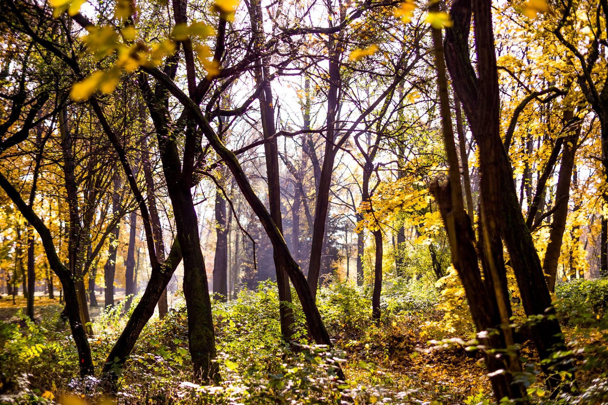 Namiesto chladného cintorínu les. Aj taký môže byť váš hrob