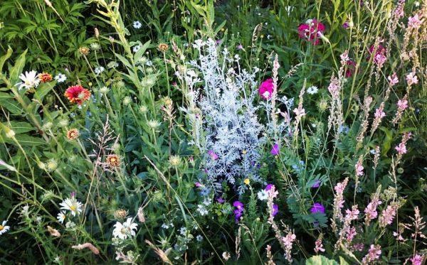 Rozmanitosť rastlín znamená viac potravy pre rôzne druhy hmyzu. FOTO - Lenivý záhradník