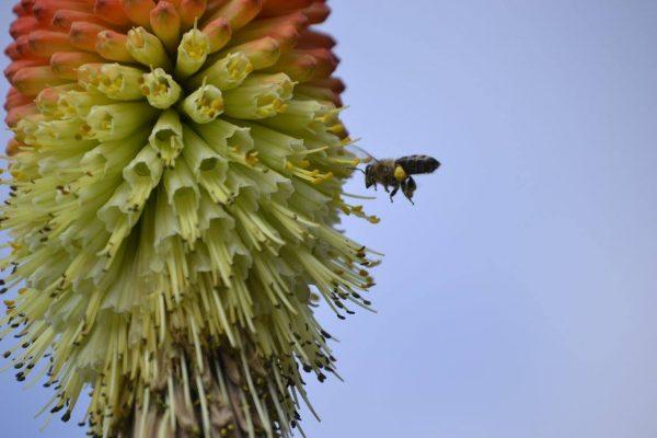 Včely majú v meste široký výber druhov rastlín. FOTO - ŽIVICA