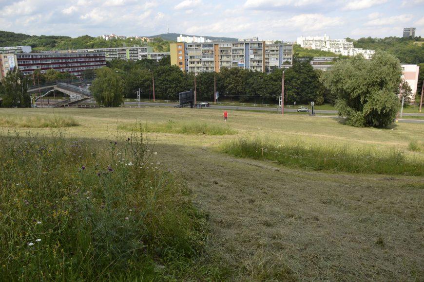 Nie celý trávnik musí byť pokosený. Príklad z Karlovej Vsi. FOTO - Živica
