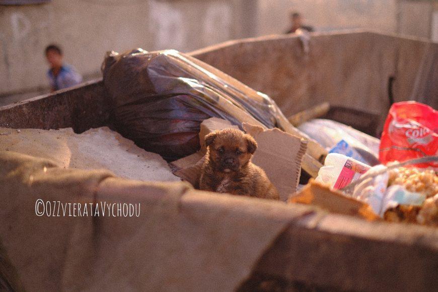 Zvieratá východu našli aj šteniatko v kontajneri.