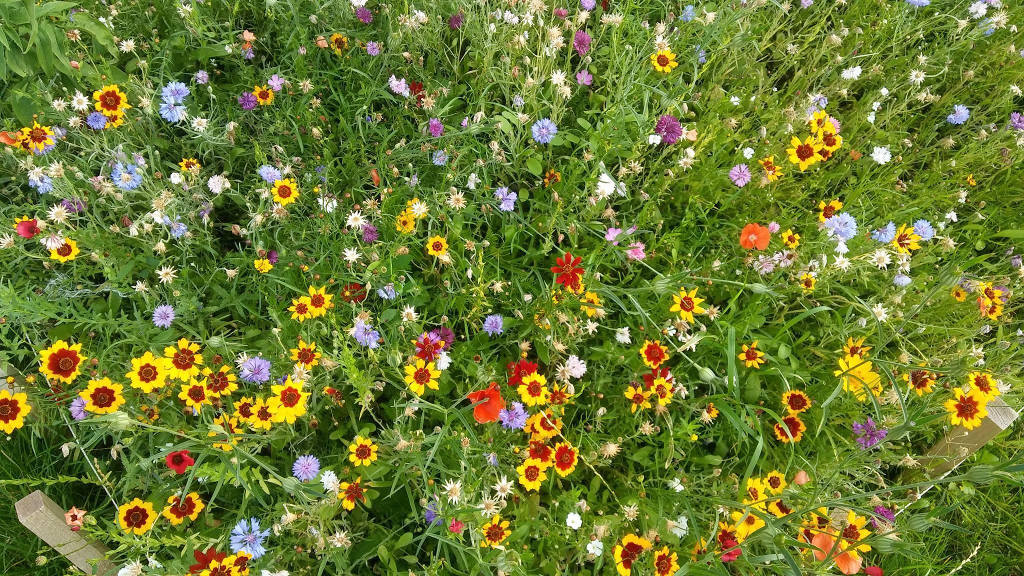 Motýle a včely chcú žiť v meste, na uzde ich držia iba naše estetické preferencie, hovorí odborník na hmyz