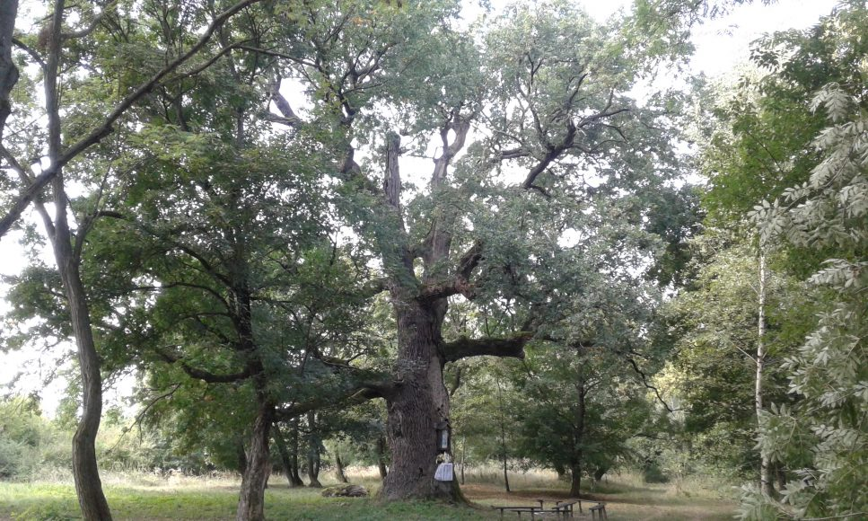 stare-stromy