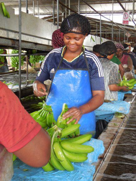 Problémom je napríklad nedostatok ochranných prostriedkov. FOTO - Make Fruit Fair