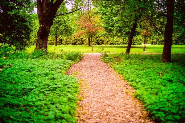 Les vzpomínek je ozajstný les. FOTO - Archív Les vzpomínek