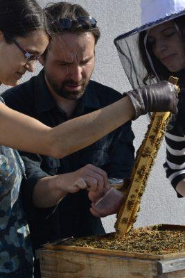 Odoberanie vzorky medu z mestského úľa. FOTO - Živica