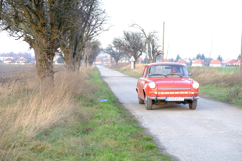 Stromy pri cestách miznú. Môžu za to zákony aj zlá starostlivosť