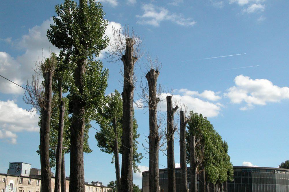 Dekapitovať sa dajú aj stromy. Na Slovensku na to umierajú bežne