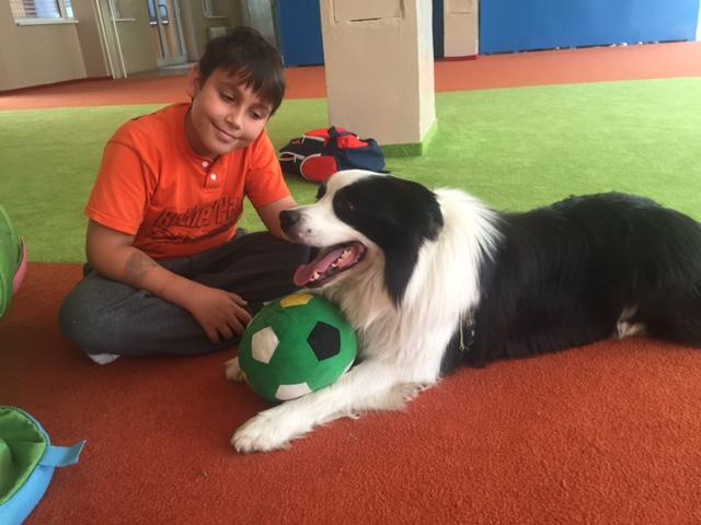 Pes Sunny je súčasťou ScioŠkoly. V jednom projekte mu deti samé navrhovali a stavali búdu. Na prvý pokus bola príliš malá. FOTO - Archív Scio