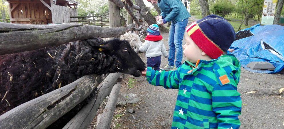 Mestské deti v Berlíne majú vlastné farmy. Učia sa tam láske k prírode