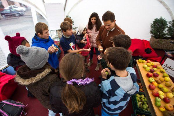 Výučba o jablkách v alternatívnej triede. FOTO - ZSE