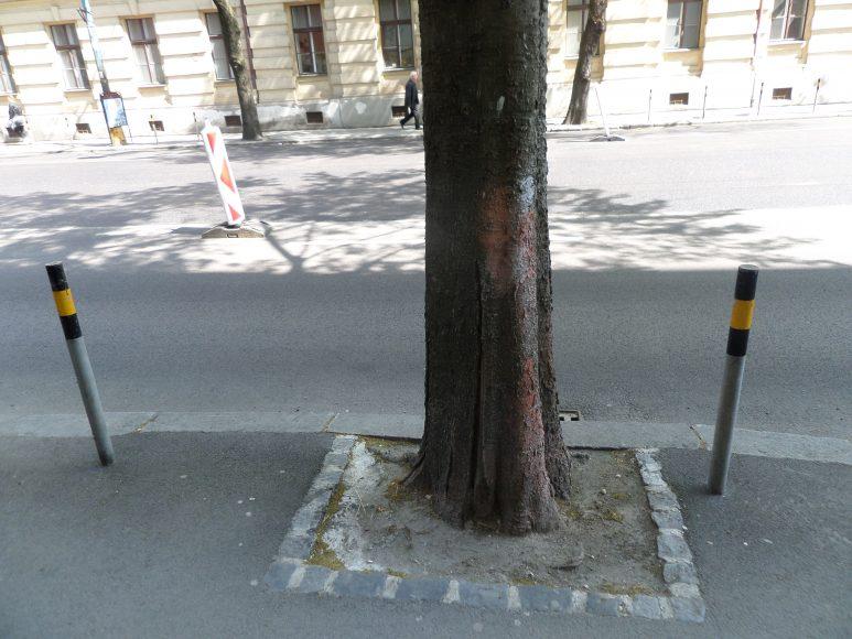 Problémom sú často zabetónované korene. FOTO - KH