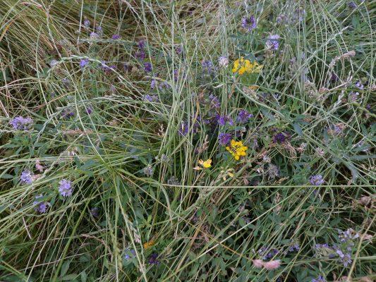 Lúčne kvety sú dôležité pre biodiverzitu. FOTO - Archív Živica