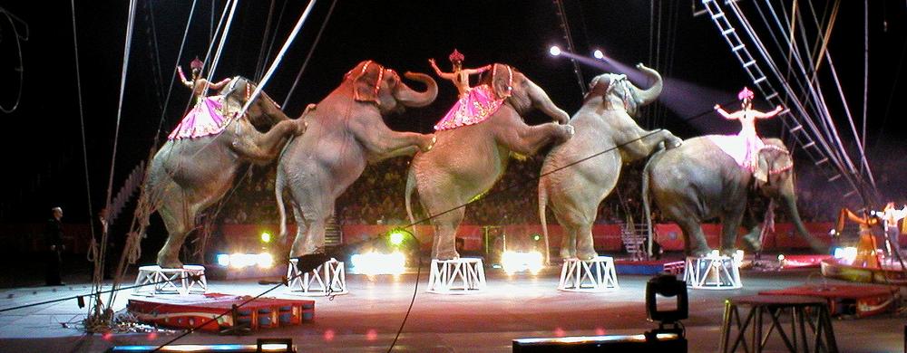 cirkusove-zvierata
