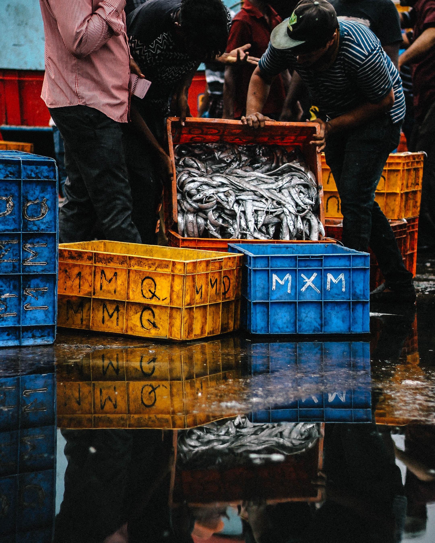 AUDIO: Morské ryby a stav oceánov