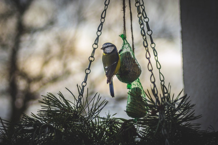 AUDIO: Ako prikrmovať vtáky, aby sme im neškodili