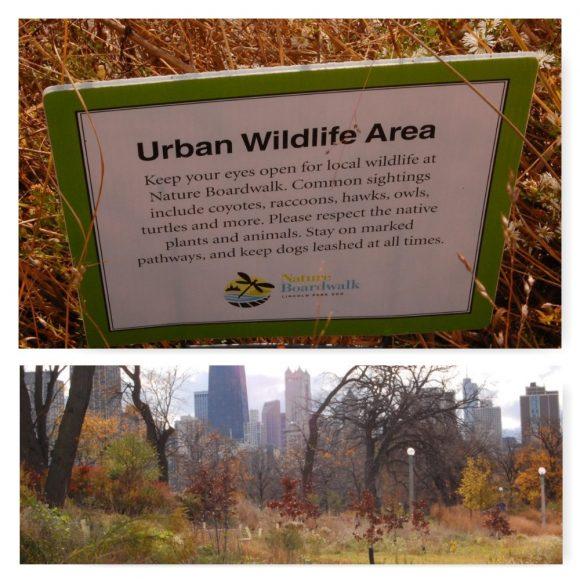 Divoký Lincoln Park pri centre v Chicagu. FOTO - Zuzana Hudeková