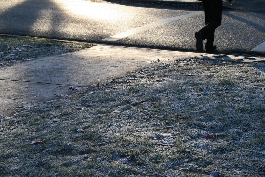 Chodníky presoľujeme z lenivosti. Odnesú si to stromy, vodné zdroje, psie labky, ale aj karosérie áut