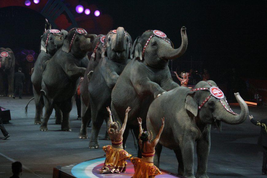 cirkus-slony