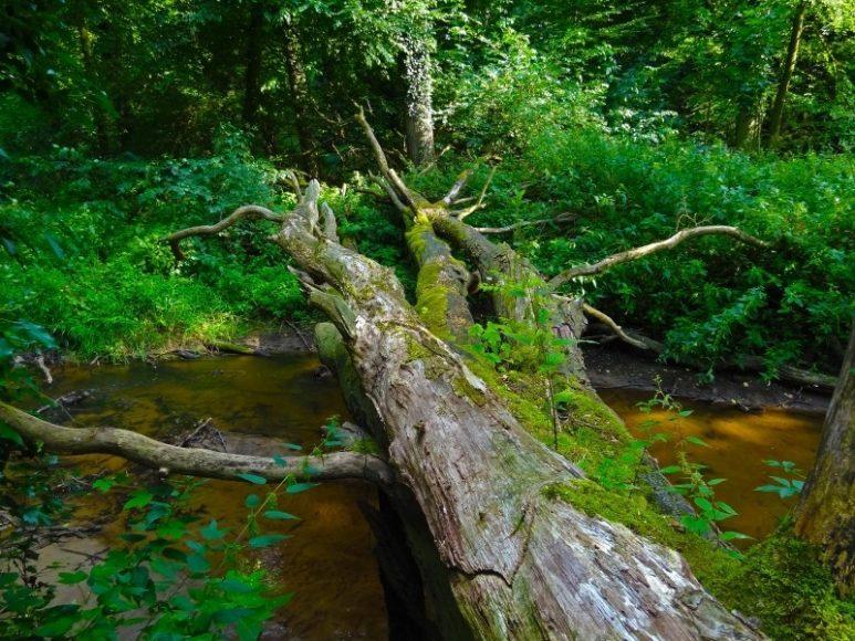 mrtve-drevo