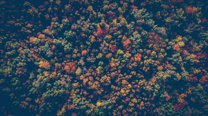 Erik Baláž: Les nikdy nebude vďaka našim zásahom fungovať lepšie. Môžeme ho len ničiť menej