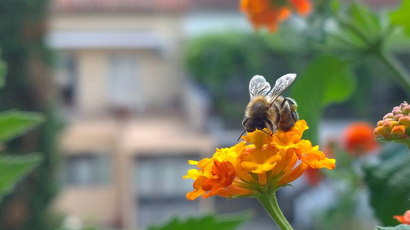 Karlova Ves kosí s rozumom a sadí lúčne kvety. Pomáha tak opeľovačom