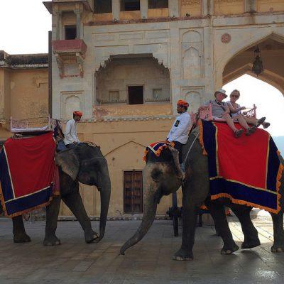 jazda-slony