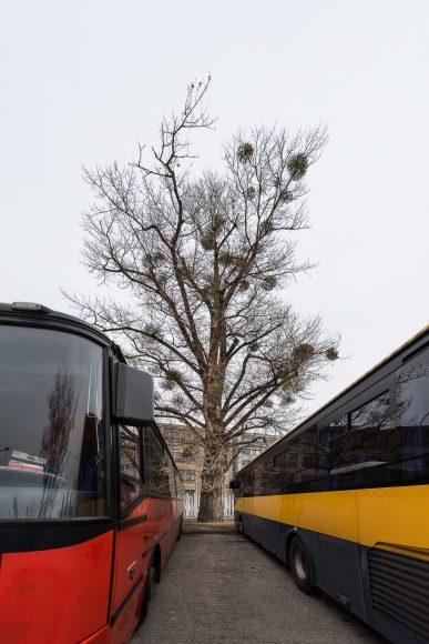 material_basic_lavice_strom Autobusova stanica Mlynske Nivy_gps_48.147072, 17.130507_foto_Peter_Cintalan