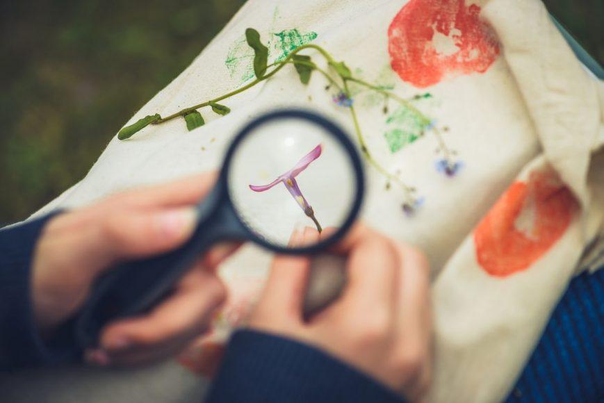 biologia-rastlin