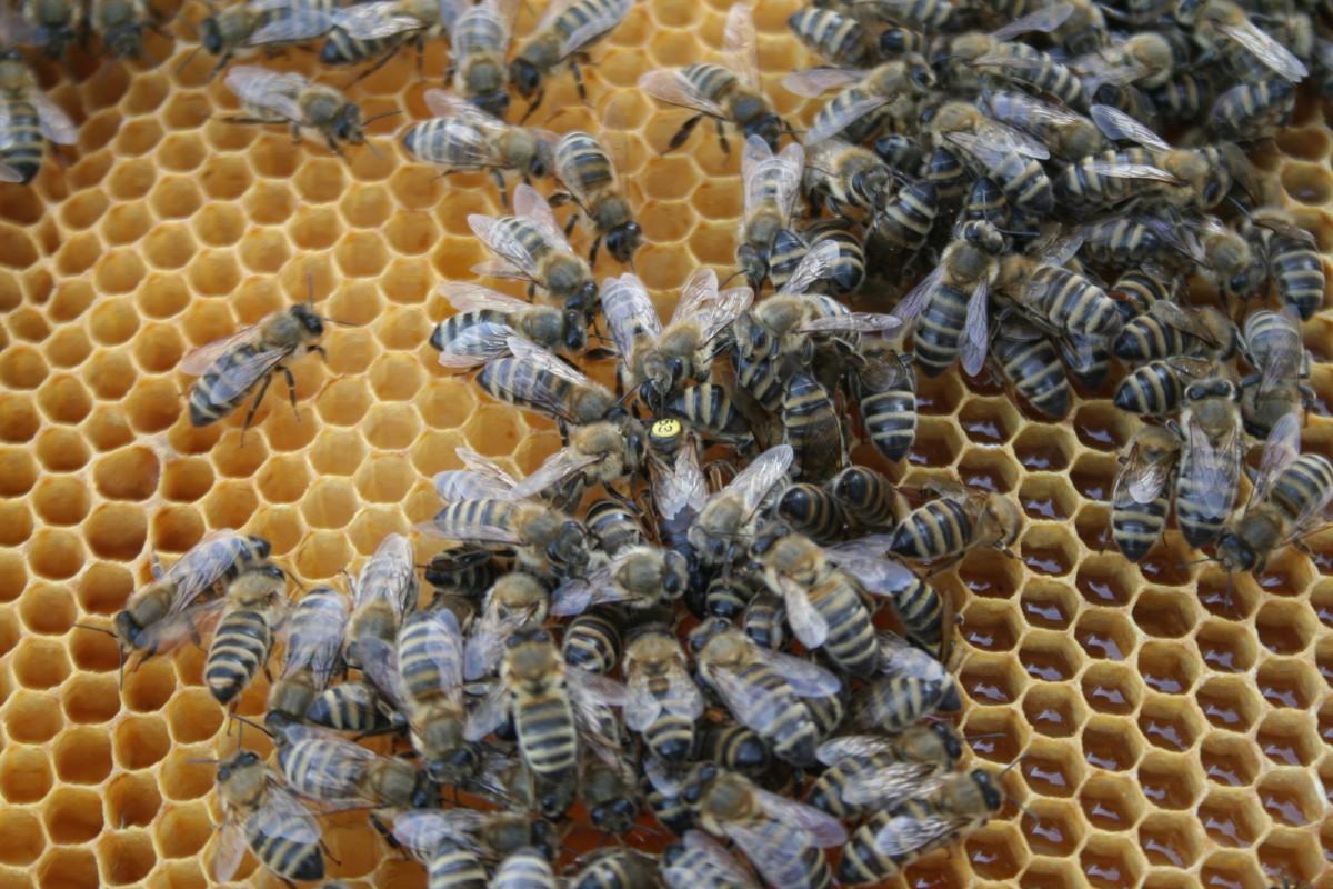 Ako med z bratislavskej strechy bojuje proti baktériám?