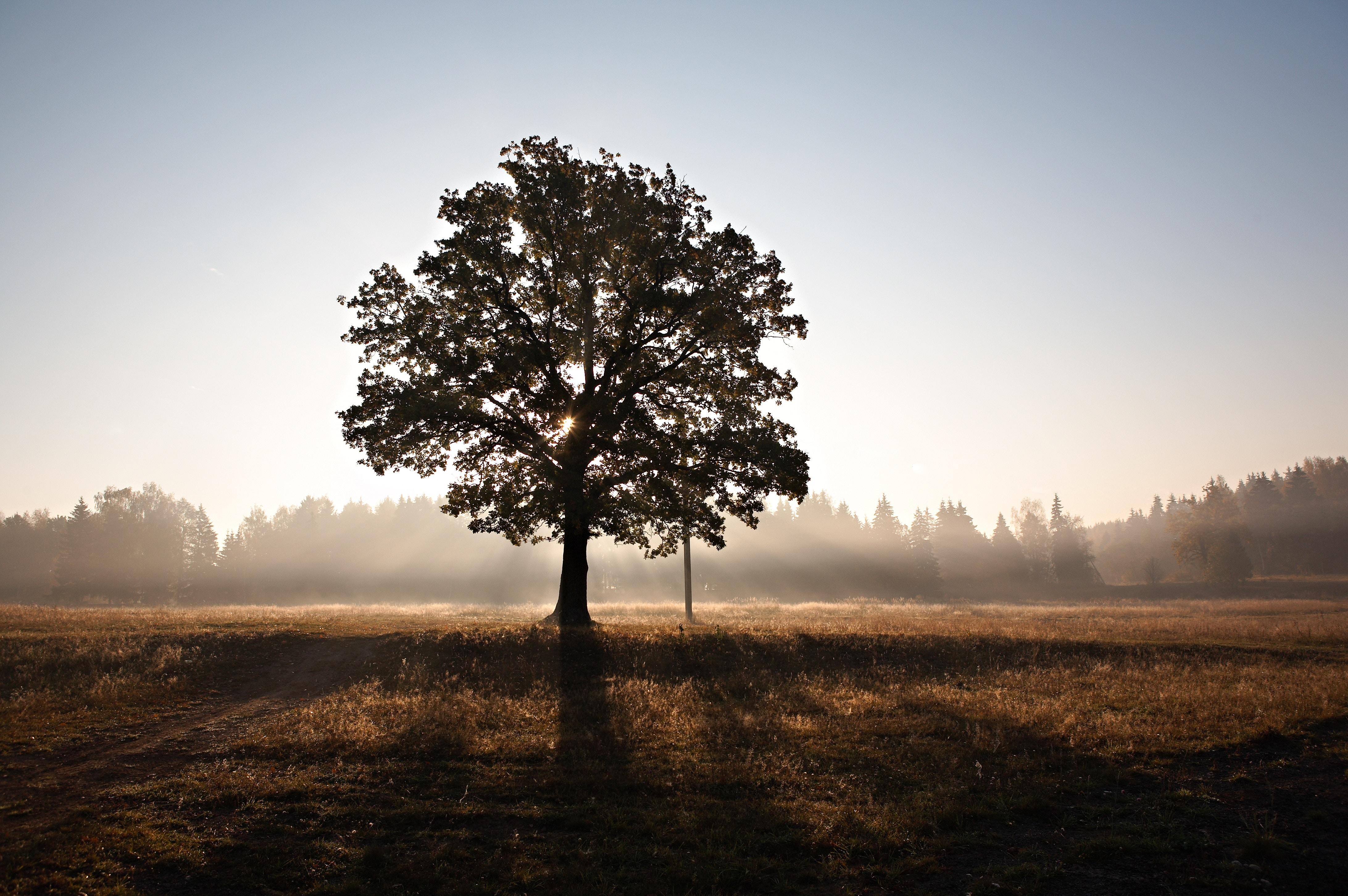 Staré stromy sú pre krajinu dôležité, na Slovensku sa však staroby často nestihnú dožiť, hovorí arborista