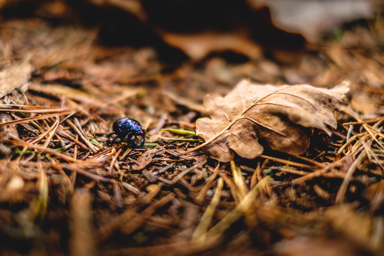 AUDIO: Ako zastaviť hmyzocídu