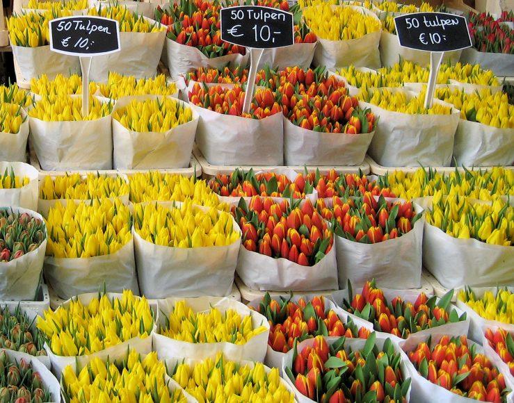 Kvety dnes kúpite aj v zime aj na benzínovej pumpe. FOTO - wikipedia.com