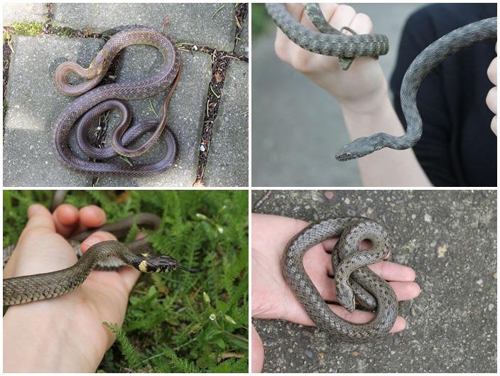 AUDIO: Hady medzi nami