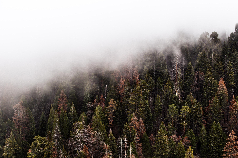 Paradoxy lesa – mŕtve drevo