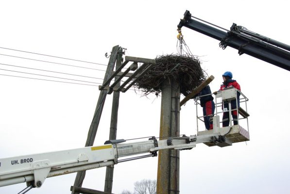 Hniezda môžu vážiť až jednu tonu. FOTO - ZSE