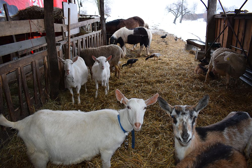 Malí farmári venovali agrodotácie miestnej škole. Chcú ukázať, že dotácie v skutočnosti bránia rozvoju hospodárstva, ktoré naozaj aj niečo produkuje