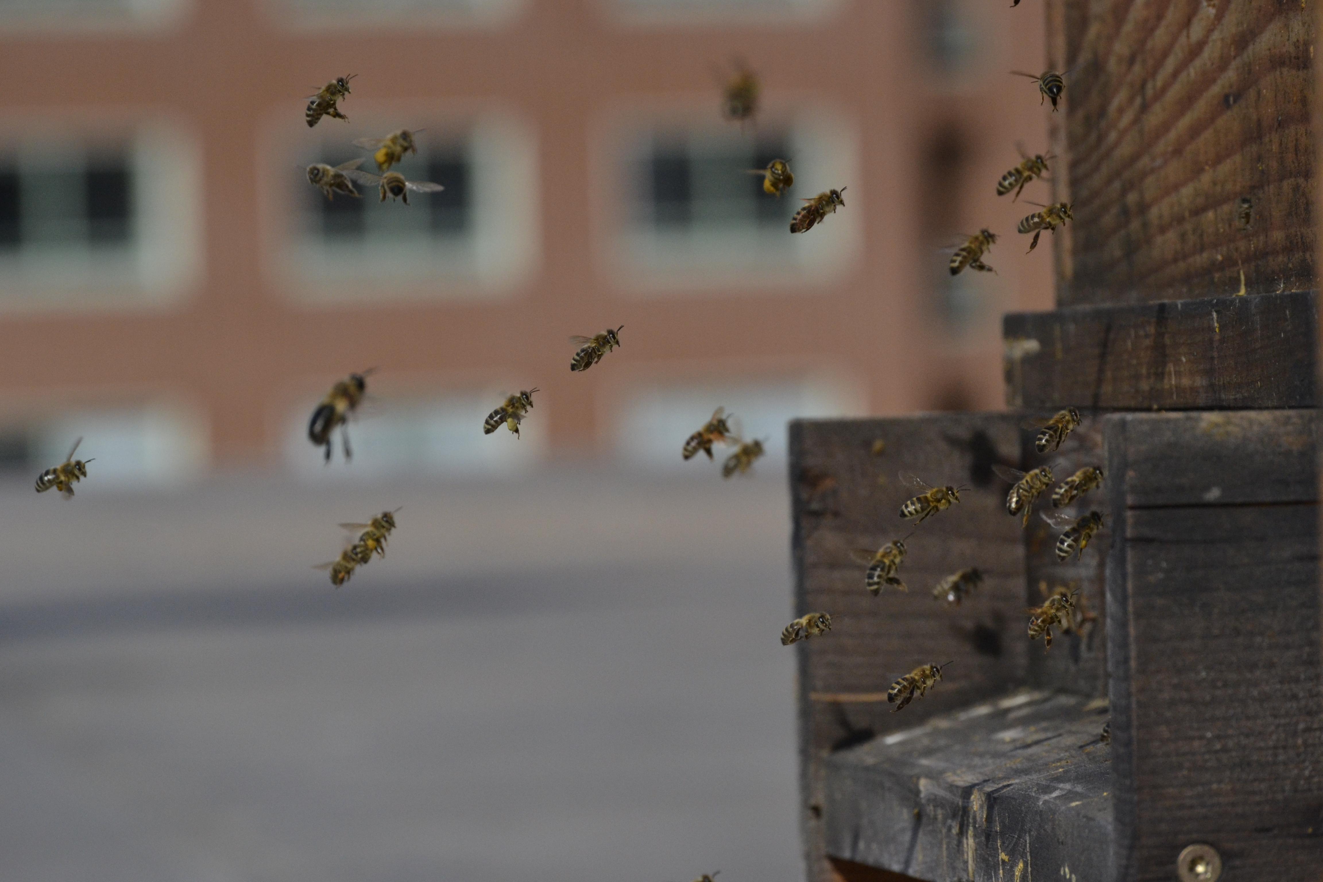 Desať faktov a mýtov o včelách a mede